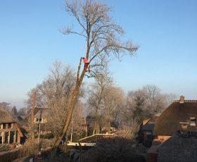 Bomen verwijderen Giethoorn