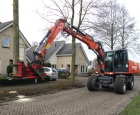 Kappen van bomen in Hasselt